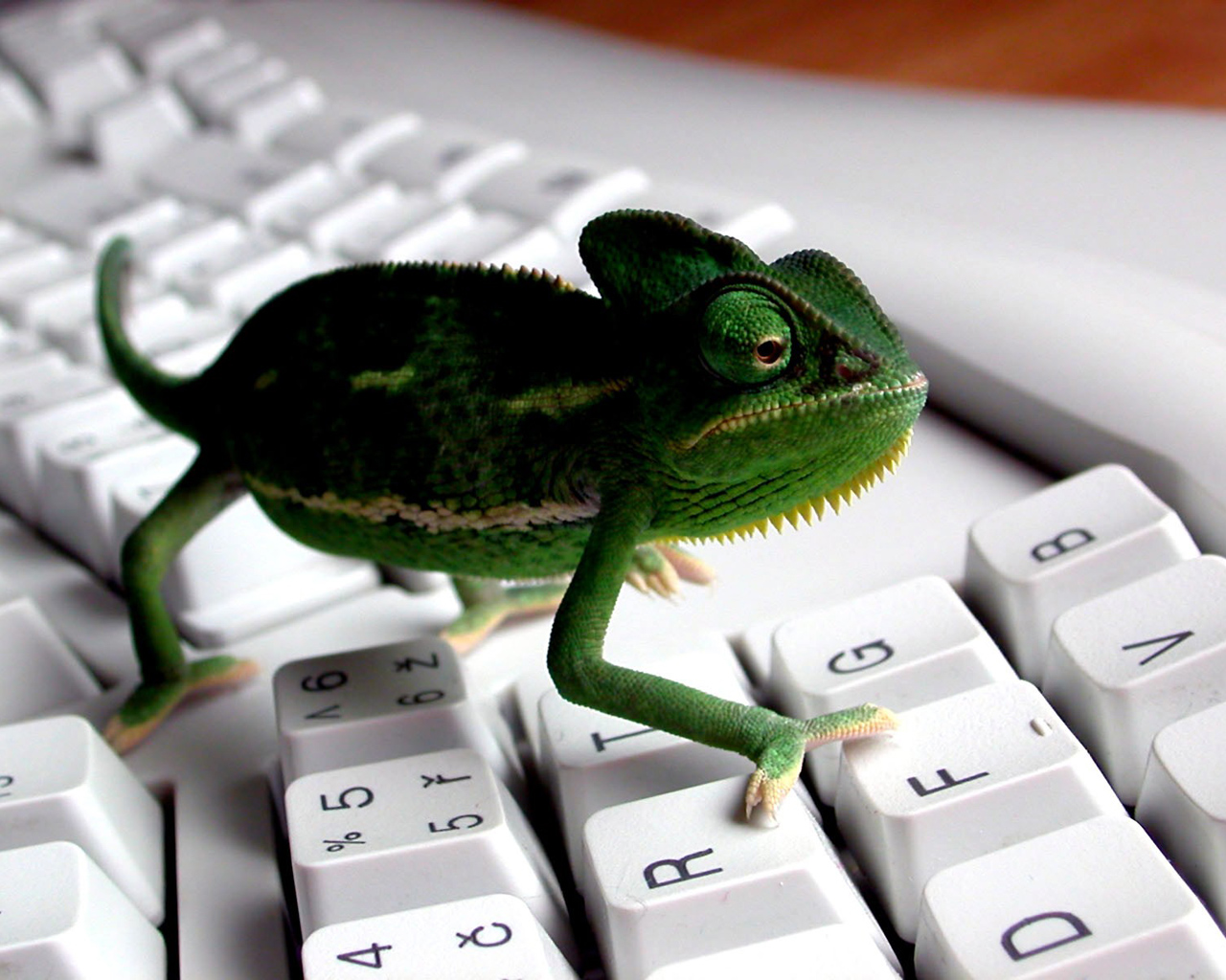keyboard Lizard