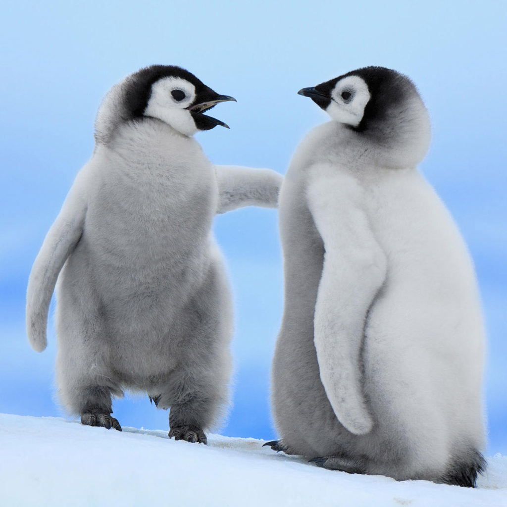 2 Baby Penguins