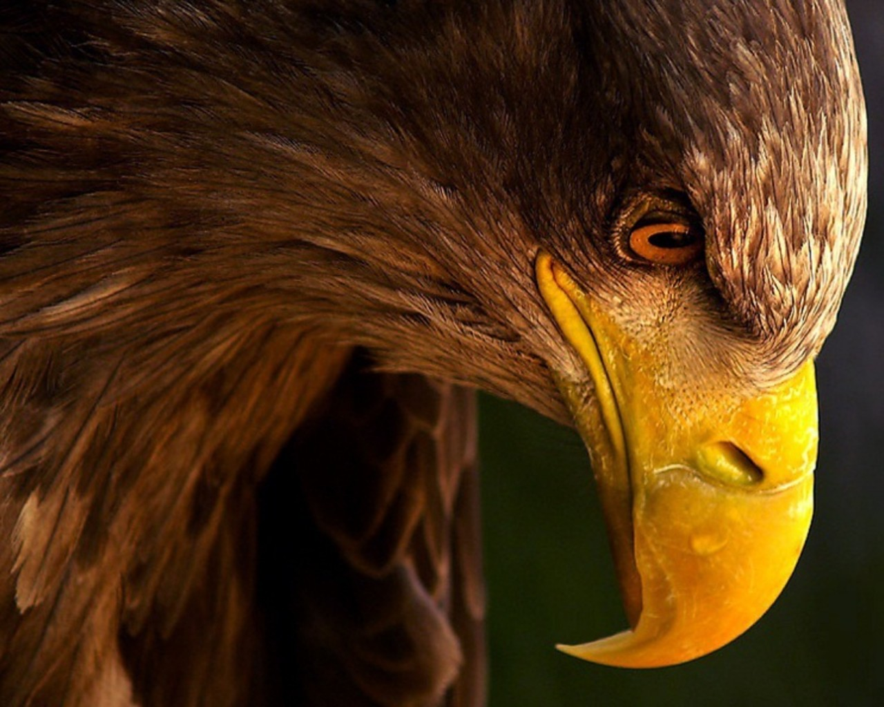 Big Eagle Profile