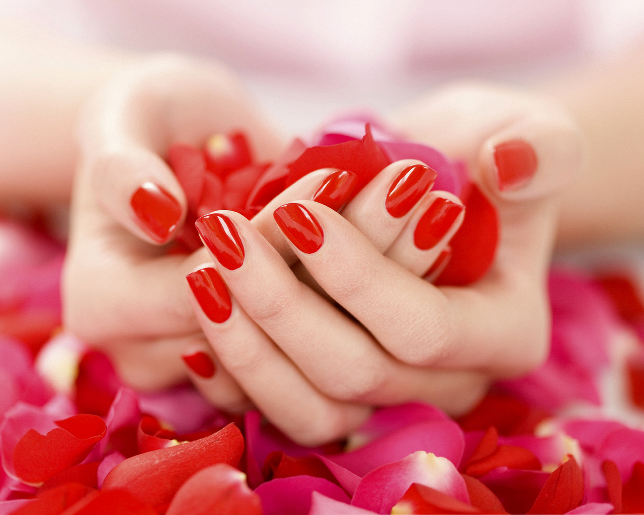 Red Rose Petals Wallpaper
