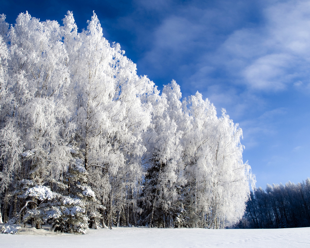 the-beauty-of-winter