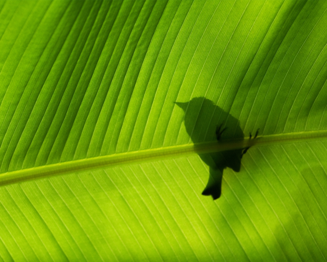 bird-on-green-leaf