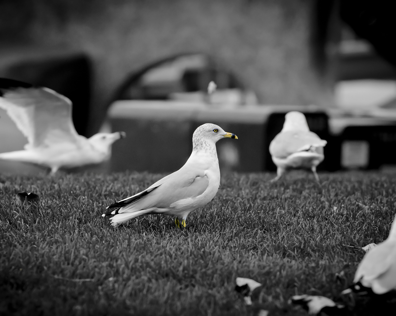 family-of-gulls