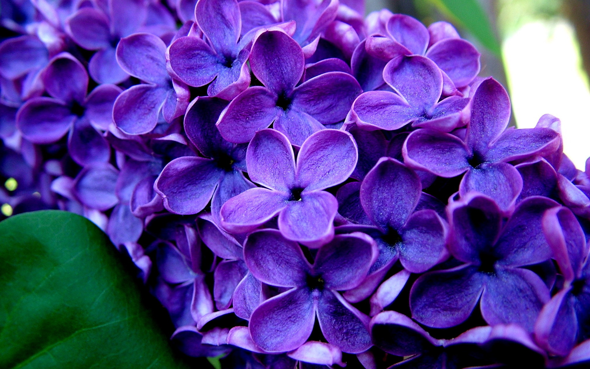 Gorgeous purple flower