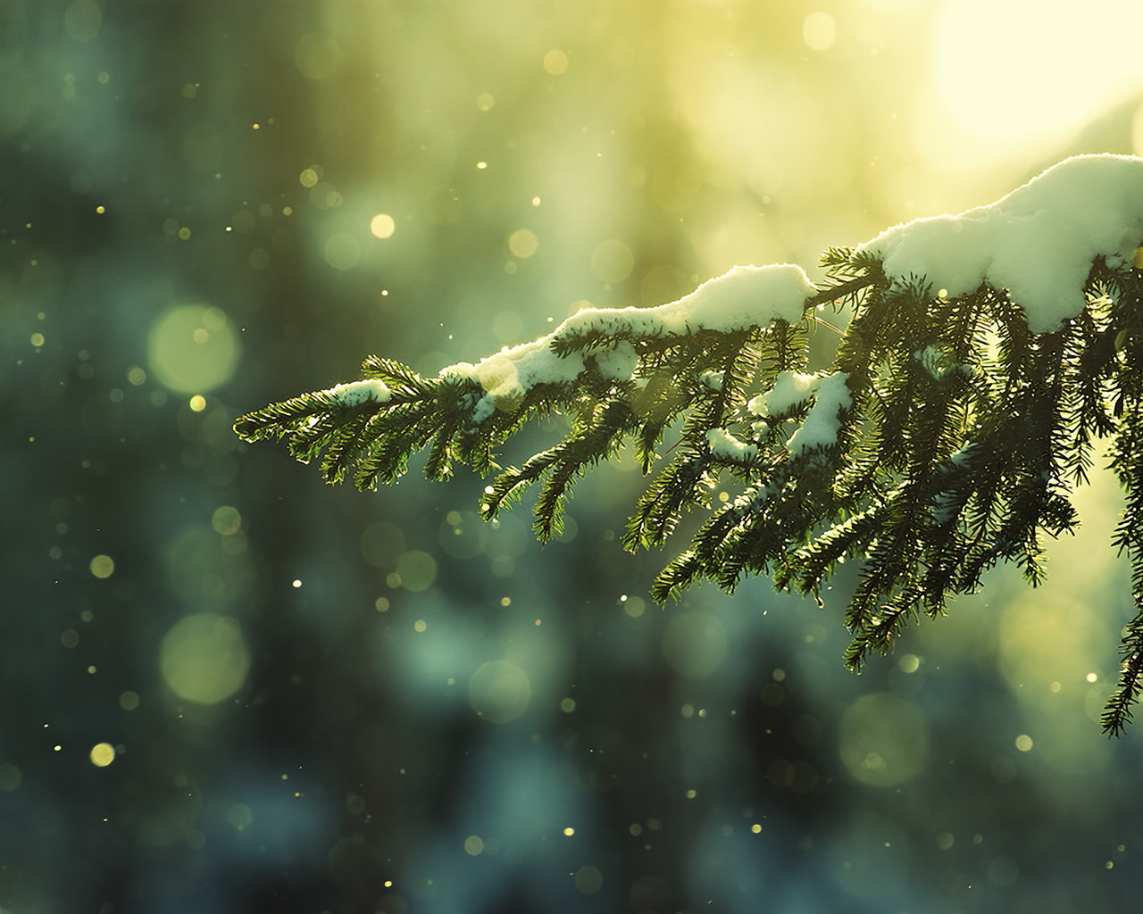 pine-branch-with-snow