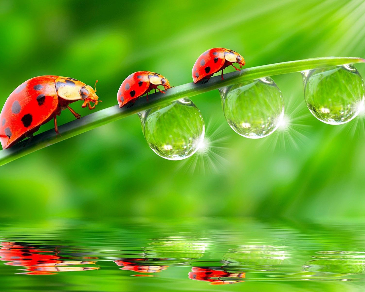 Ladybugs and Dew Drops