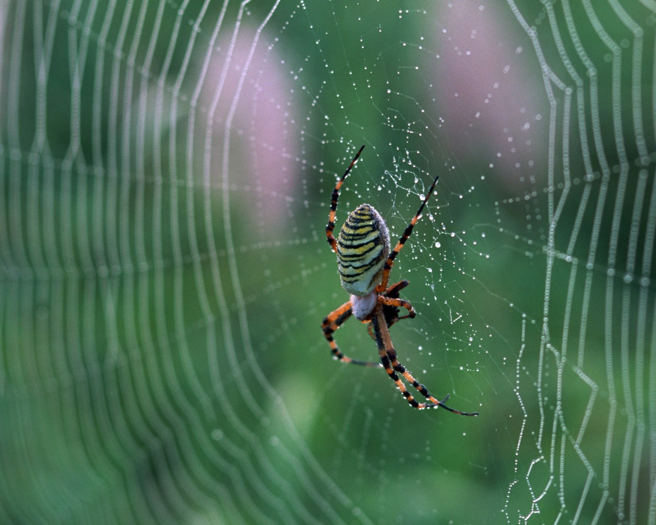 Spider on a Spider Web