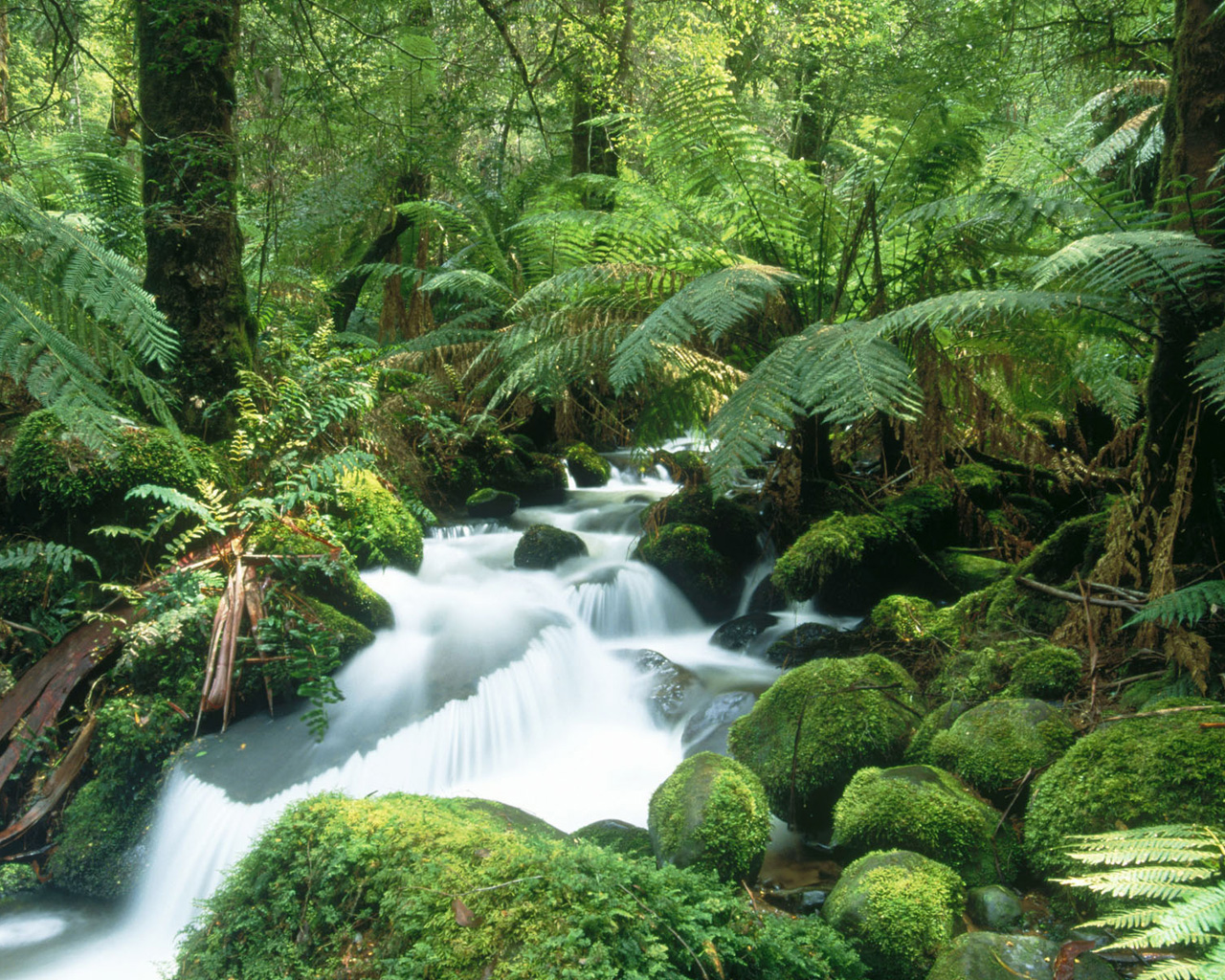 Cement Creek Yarra Ranges National Park