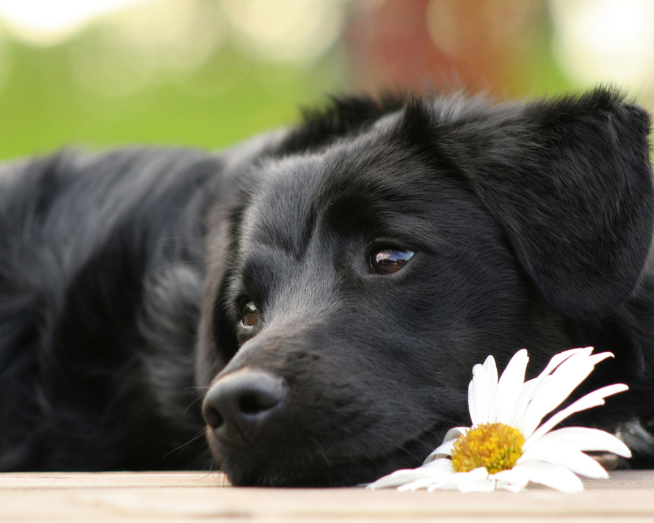 dog-and-flower