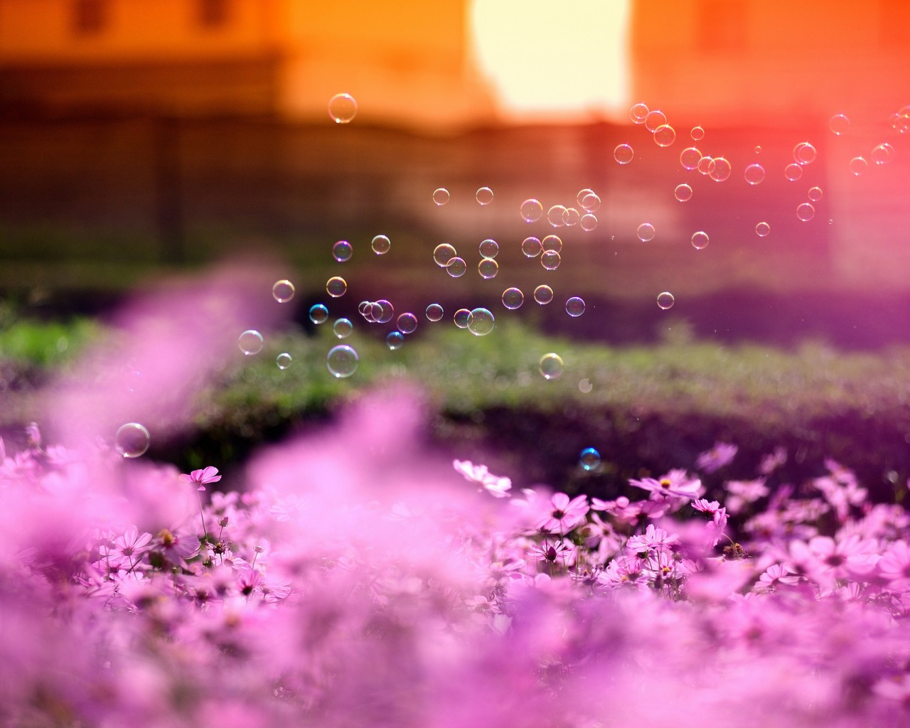 Purple Flowers and Bubbles
