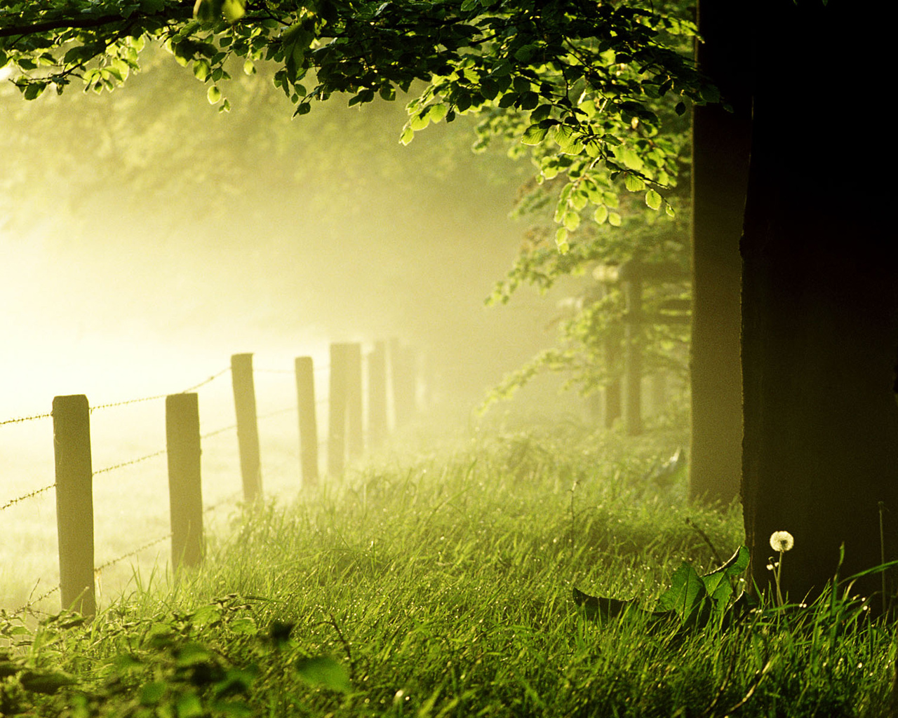 Green nature in the morning