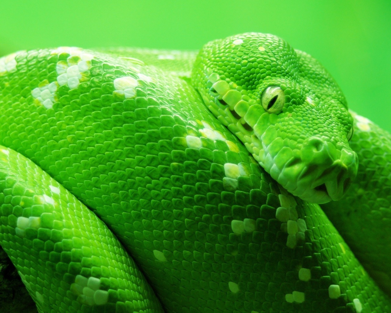 another-green-snake