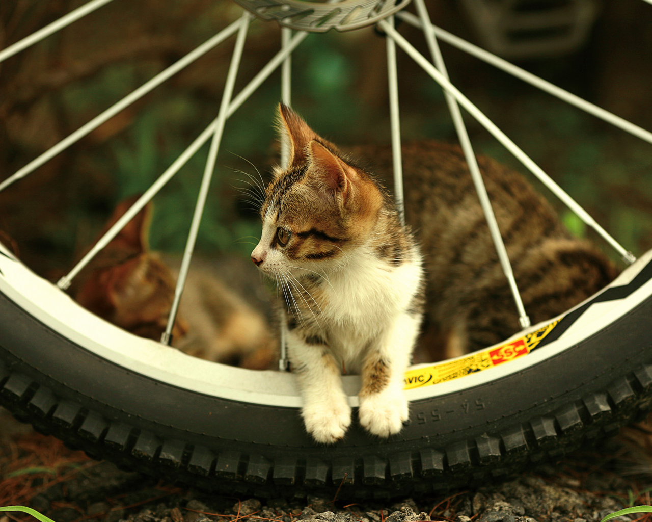 Cute kitty near a bike wheel