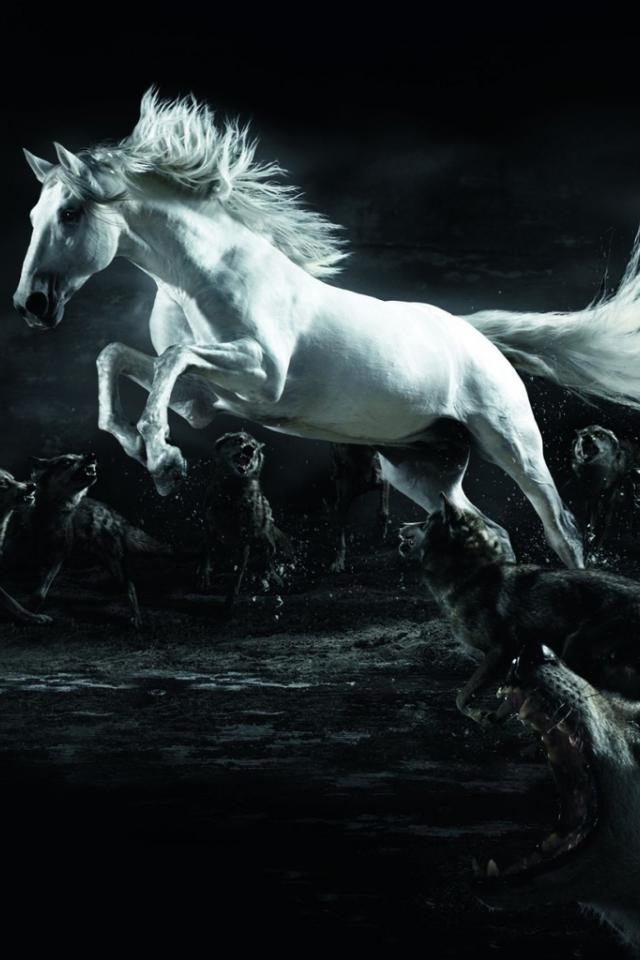 White Horse Surrounded By Wolves